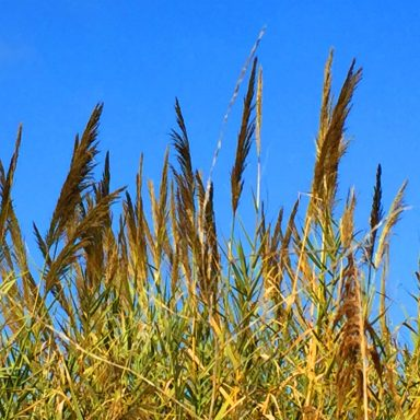 Tall grasses near the yurts.